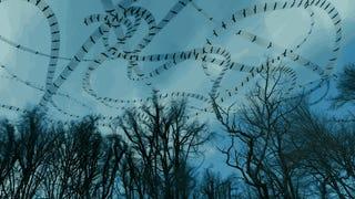 These Mesmerizing Videos Reveal The Hidden Flight Paths Of Birds