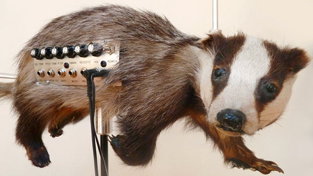 Creepy Taxidermied Animals Now Make Creepy Music Too
