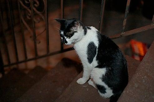 Dear Keith Gessen: We Got You a Kitten