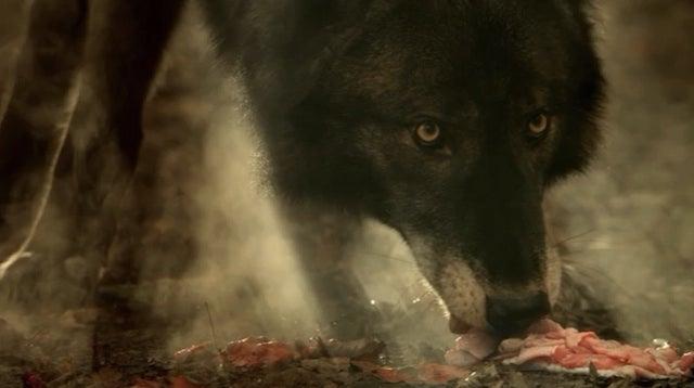 Hemlock Grove has fantastic werewolves, but its story lacks bite