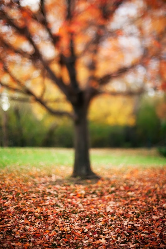 Shooting Challenge: Fall Leaves Part II