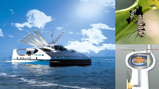 Biomimicry: From Fish-Inspired Wind Turbines to the Future of 3-D Printing, and More from TreeHugger