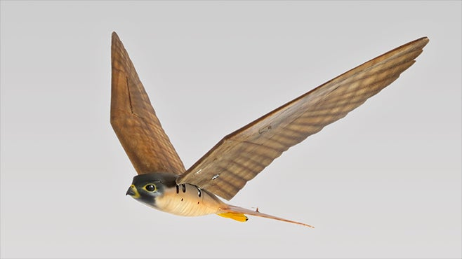 'Robird' Drones Chase Birds Away From Airport Danger