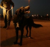 Iraqi Dog Is On Route To US • Nebraska To Rewrite Safe-Haven Law