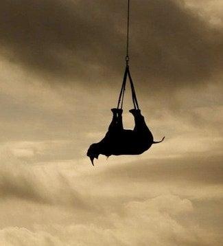 Africa's Western black rhino has been declared extinct