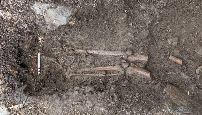 Medieval Skeleton Found Dangling From the Roots of a Fallen Tree