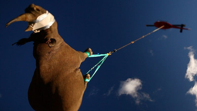 Why Is This 2-Ton Rhino Flying Upside Down?