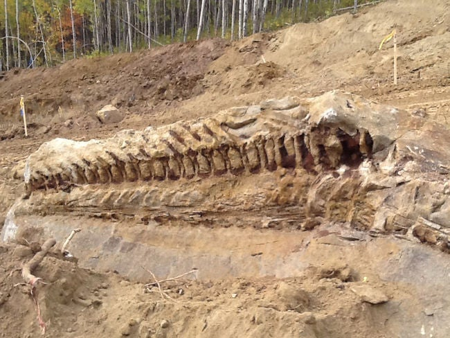 One of the most ridiculously incredible fossils you will ever see