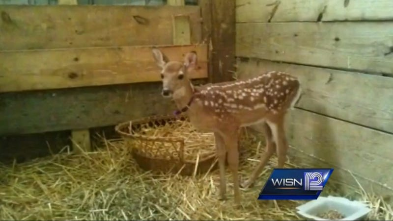 Armed Government Agents Raid Animal Shelter, Execute Harmless Baby Deer