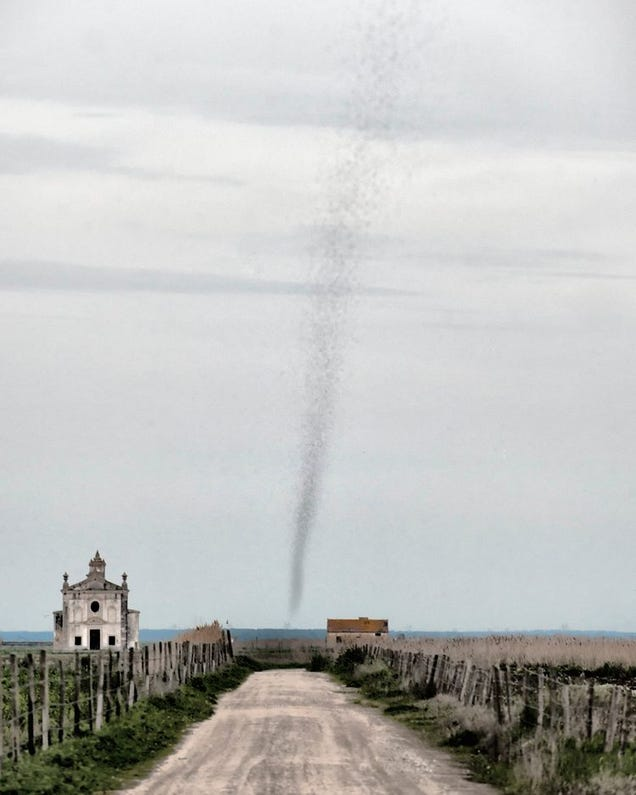 Real Life Mosquito Tornado Is Far More Terrifying Than ...