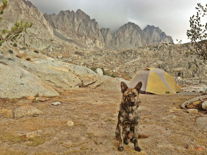 How To Take Your Dog Camping