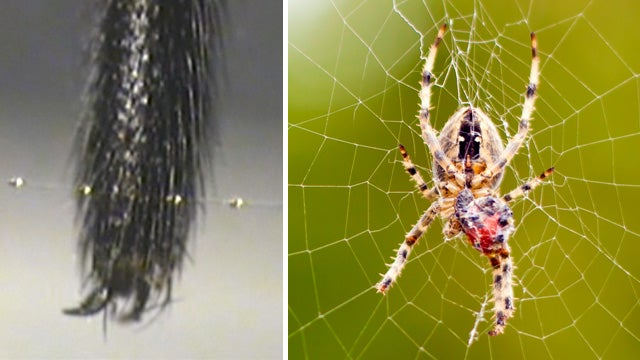 Why Spiders Don't Stick To Their Own Webs