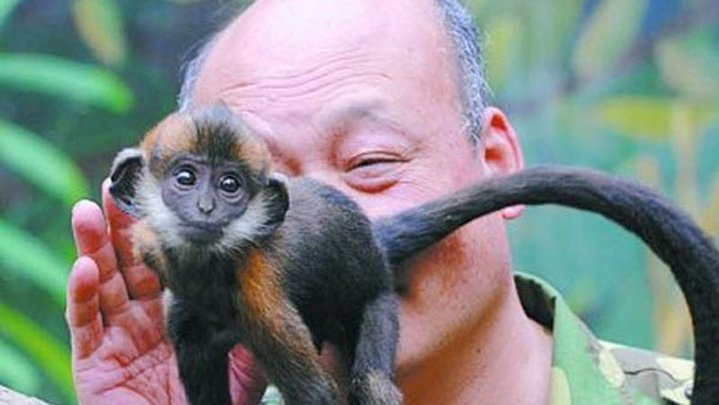 Zookeeper Saves Tiny Monkey By Licking Its Butt Until It Poops. Seriously.