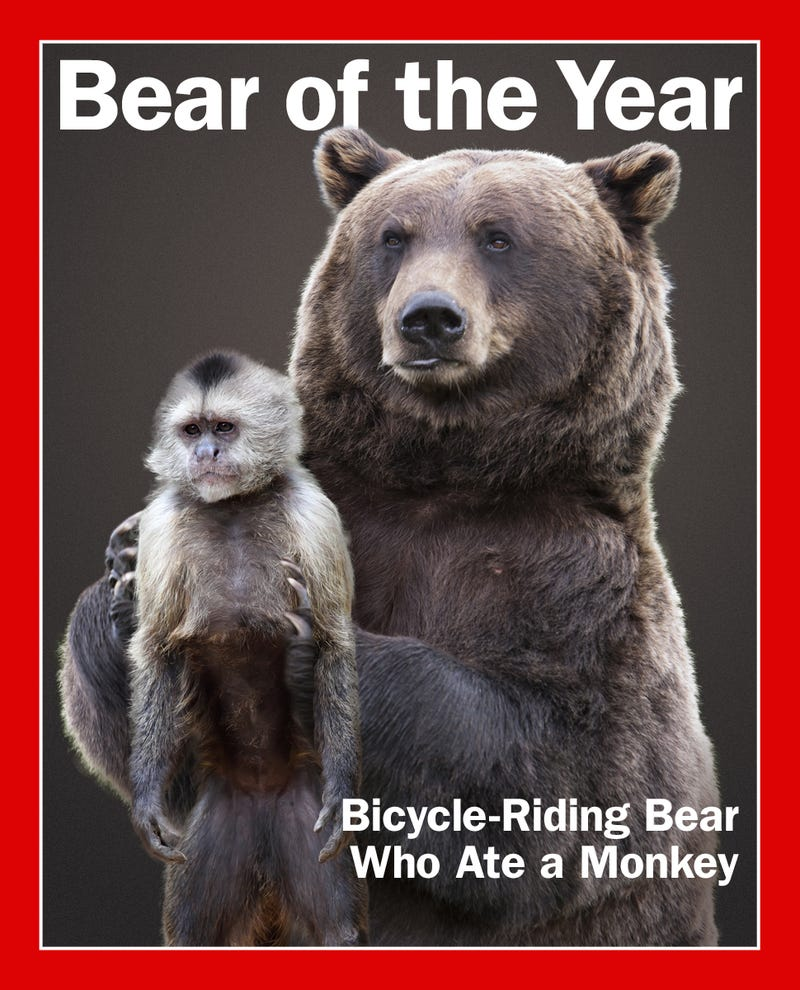 The 2013 Deadspin Bear Of The Year