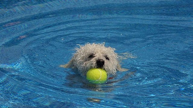 Use a Tennis Ball to Keep a Swimming Pool Cleaner