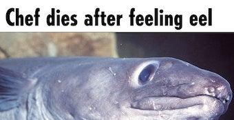 Eel Eats Man's Bowels