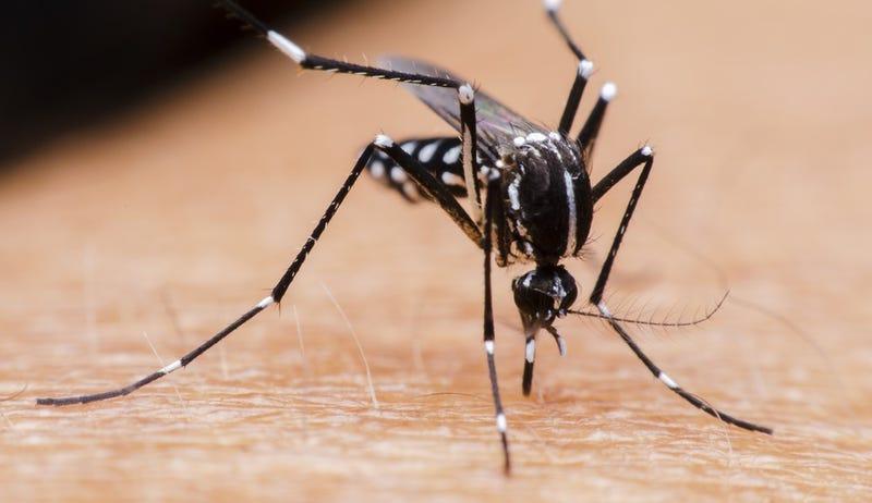 La OMS declara estado de emergencia internacional por la propagación del virus del Zika