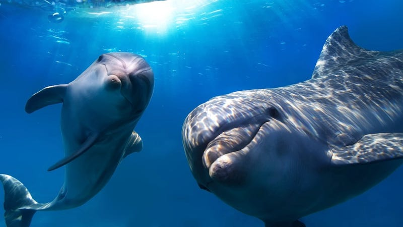 Scientist Say Dolphins Call Each Other By Name