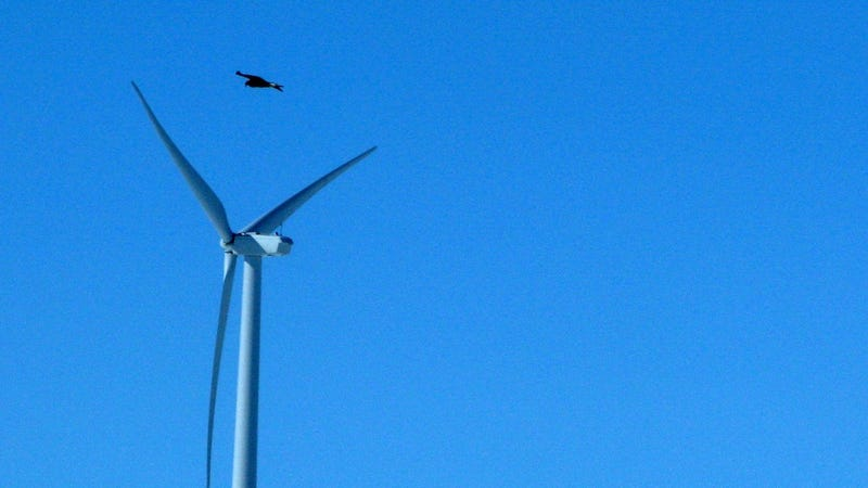 Energy Company Owes a Million for Murdering a Bunch of Golden Eagles