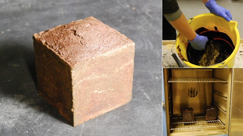 Are Blood Bricks the Future of Building?