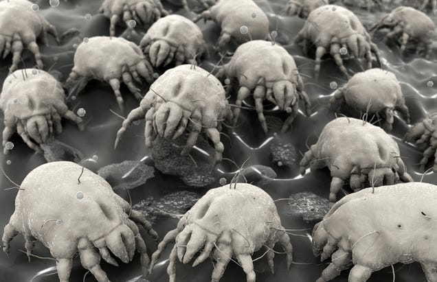 A 'Nano Vaccine' That Combats Dust Mite Allergies