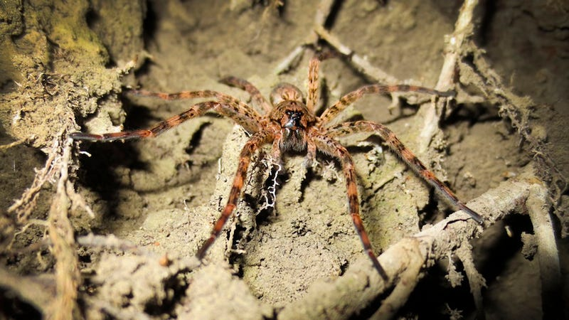 This Is Why Spider Monogamy Is Terrifying