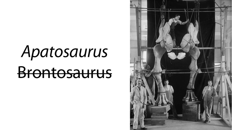 Awesome 1900s Dudes in Awesome Suits Mounting Awesome Dinosaur