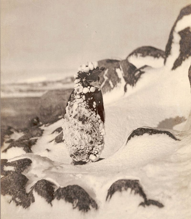 Strange Historic Photos From Antarctica and Other Kingdoms of Ice