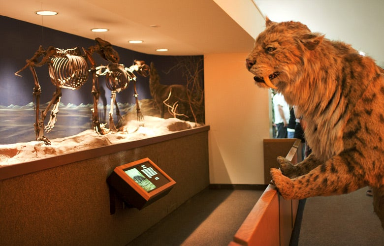 8 Amazing Museums Where You Can Bring a Sleeping Bag and Stay the Night