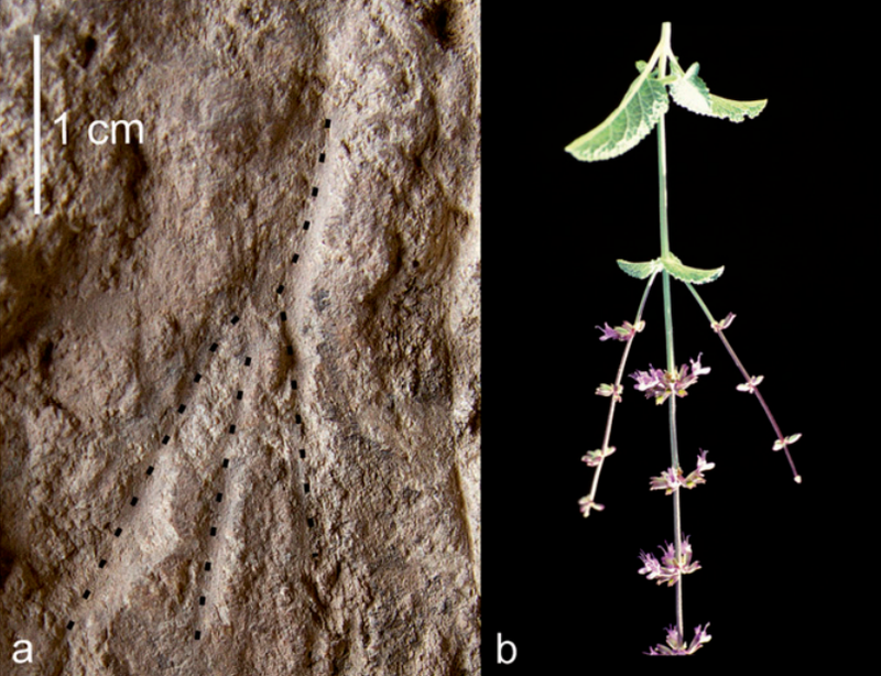 Oldest funerary flowers ever unearthed in Israel