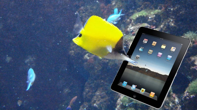 Researchers Make a Video Game for Fish, Because Serious Science Can Be Very Silly Sometimes
