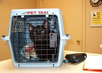 Self-Insure Your Pets Instead of Buying Insurance