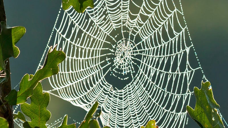 Researchers Can Now Easily Recognize Spiders Based on Their Web Design Skills