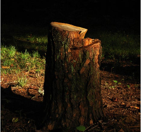 Hackers Help Loggers Smuggle 1.7 Million Cubic Meters of Wood Out of Brazil