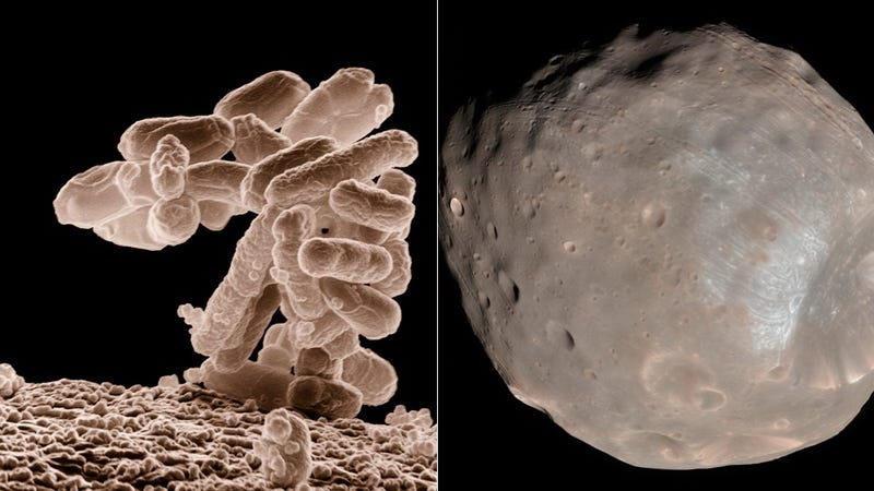 We're Sending Germs to Mars