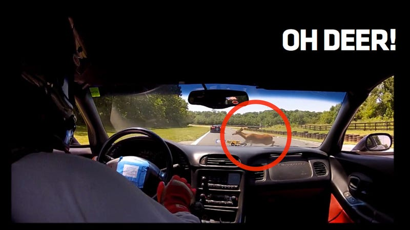Watch A Deer Crash Into A Racing Corvette's Windshield