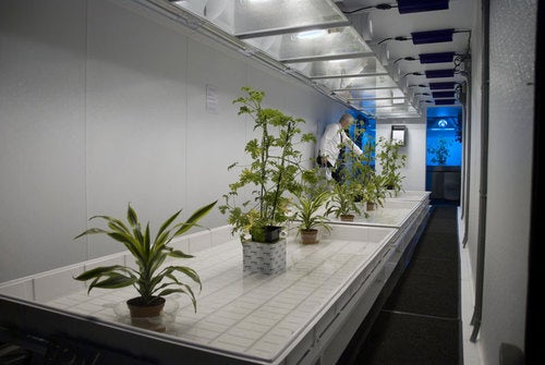 "Adult Entertainment Expo Tow & Grow Mobile Hydroponics Trailer For Cultivating ""Herbs"""