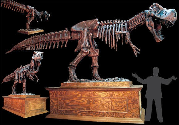 $22,000 T-Rex Skeleton Is Worth the Cost of Taking the Bus