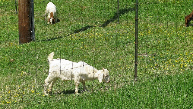 For True Happiness and Mental Health, Challenge the Myth of the Grass Being Greener on the Other Side