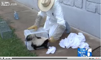 Skunk Whisperer Saves The Day • Men Are Gross And Don't Wash Their Hands