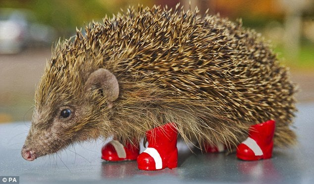 Sega Promotes Awareness Of Endangered Hedgehogs By Being Cruel To Them