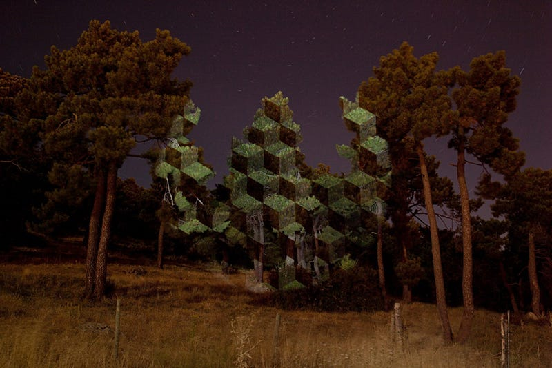 Light transforms trees into floating geometric structures