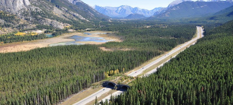 These Incredible Man-Made Highways Are Built Just for Animals
