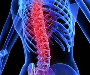 Scientists Teach Spine Nerves To Regenerate