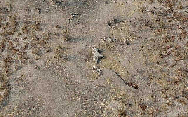 Poachers use cyanide to massacre over 300 elephants in Zimbabwe