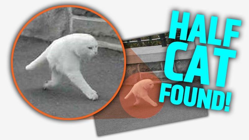 Google Street View Captures Elusive Two-Legged Half-Cat [UPDATE]
