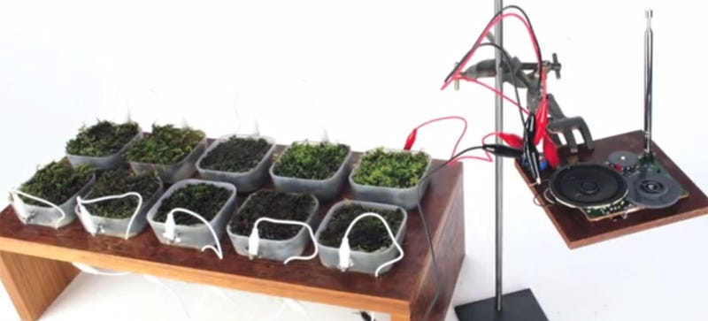 Moss-Covered Table Uses Photosynthesis To Power an FM Radio