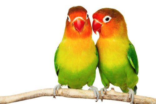 Scientists: Being Gay Is Good, if You're a Bird
