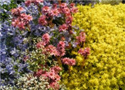 Common gardening mistakes (and solutions)