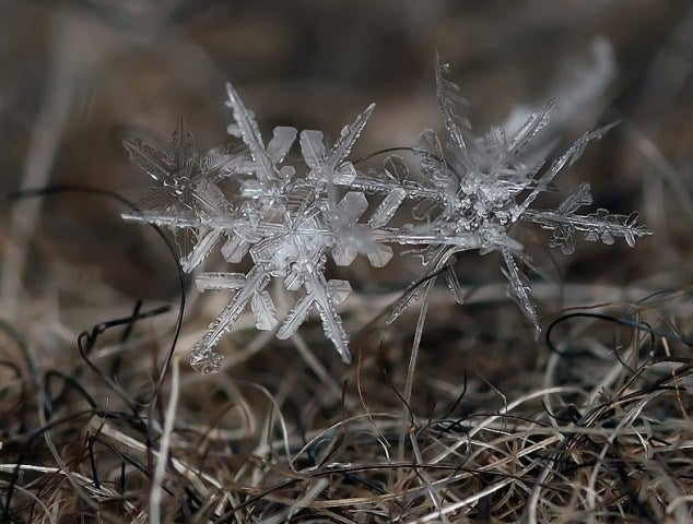 These Macro Pictures of Snowflakes Are Stunningly Beautiful